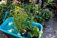 wagon of hummingbird plants 900 092