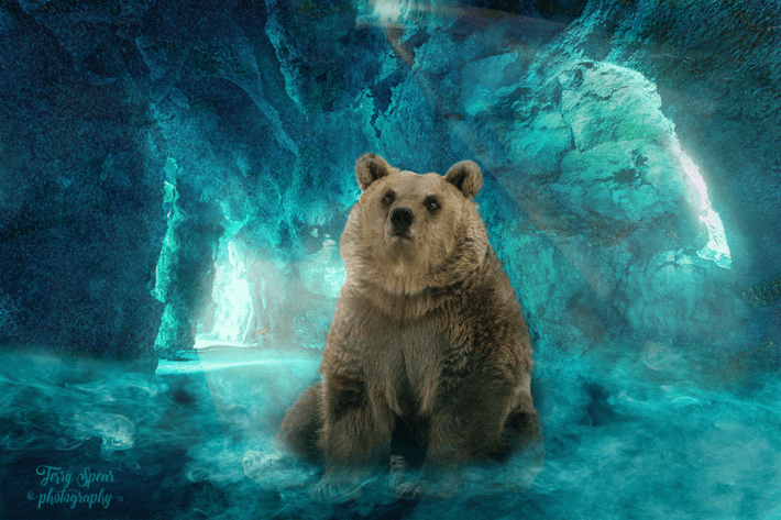 Cave Background green and bear 900 -6