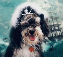 Tanner pirate bad hair day ship 900