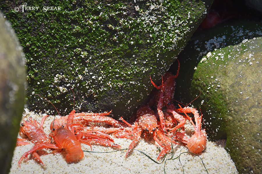Crayfish 900 San Diego 4414