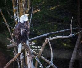 eagle 900 112