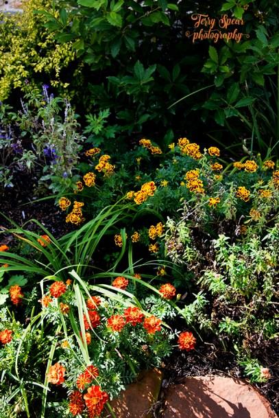 mum orange and yellow and purple flowers 900