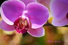 Purple flowers 900 San Diego 3217
