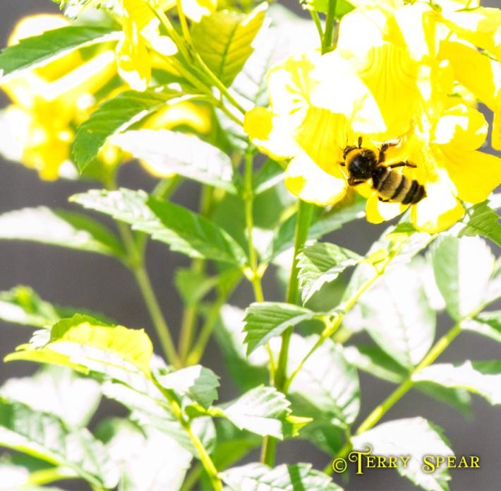 bumblebee1 900 042