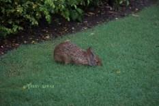 bunny 900 Orlando Disney RWA 2017 3942