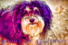 Tanner portrait in purple art 900 010