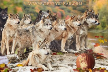 wolves at Halloween 900