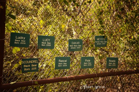 Bears in the one enclosure sign 900 2316