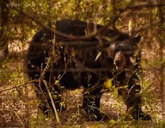 black bear looking at us from big enclosure 900 2308