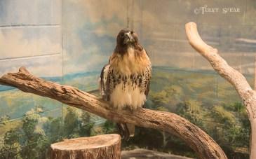 falcon 900 107
