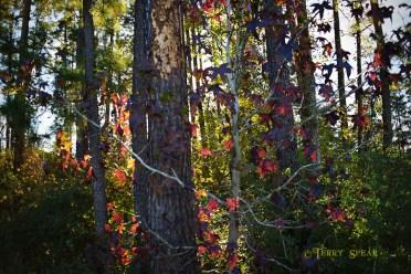 Fall leaves 900 Thanksgiving walk 002