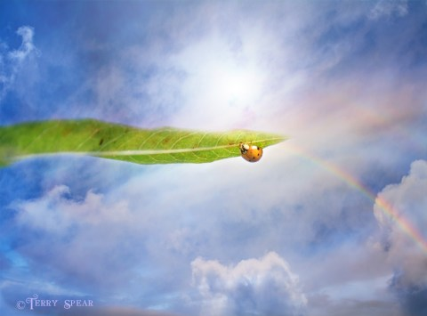ladybug sky rainbow 900