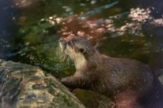 river otter 900 1483