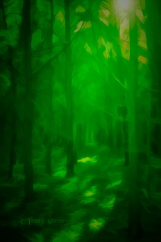sun shining through the forest 900 green surrealistic woods 202