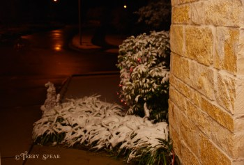 Snow in Spring 900 014