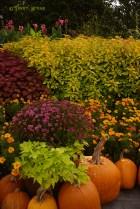 arboretum pumpkins and flowers 1000 996