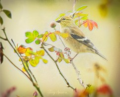 goldfinch and new rose leaves oil 1000 048