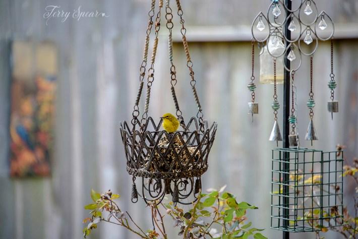 goldfinch brighter 1000 026