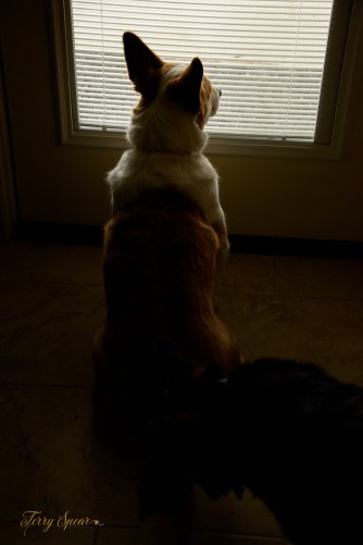 Luna watching out the window 1000 007