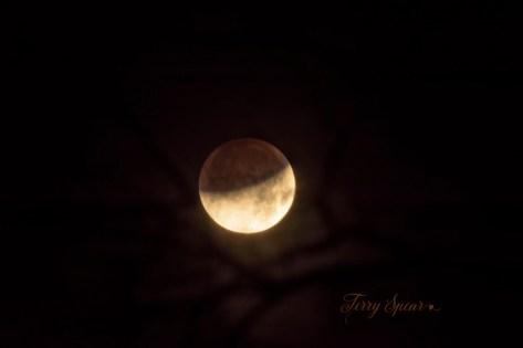 lunar eclipse, supermoon, blue moon 1000 009