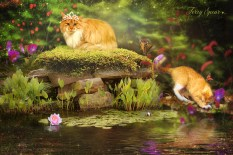 tabby cats in fairy garden2 1000
