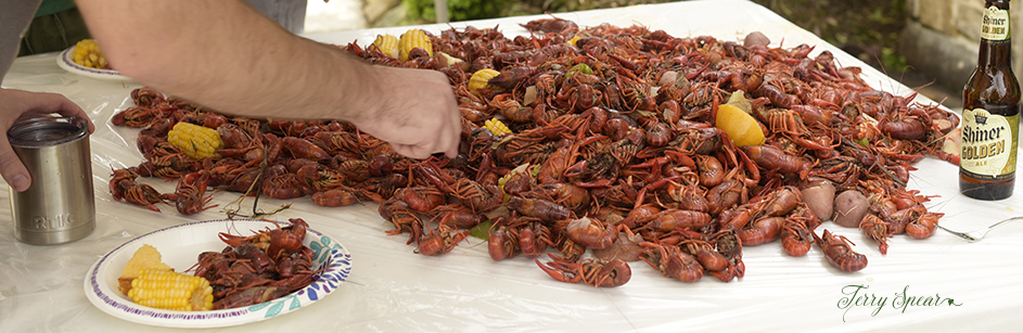crayfish cooked 1000 065