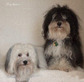 puppies in doorway with light 1000 005
