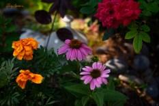 fairy garden 1000 001