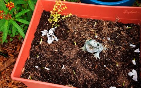 garlic garden 1000 001