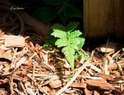 woodland fern 1000 001