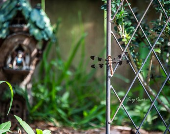 dragonfly and the fairy in the boot cropped 1000 031