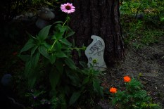 fairy door, marigolds, coneflower, Spanish heather 1000 002
