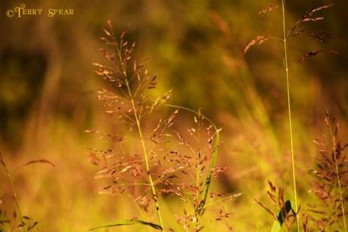 wild grasses wetlands Dallas