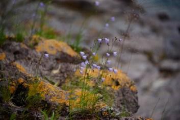 bluebells, mossy rocks (800x534)