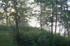 fog and sun (800x534)