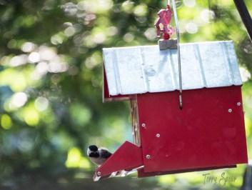 Donna's birdhouse original 1000 Minnesota 389