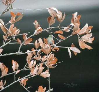 hummingbird 1000 044
