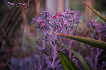 Purple plant 1000 Minnesota 096