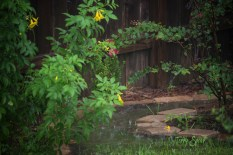 rain puddles 1000 019