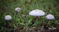 walk mushrooms 1000 032