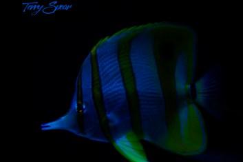 blue fish 1000 1004