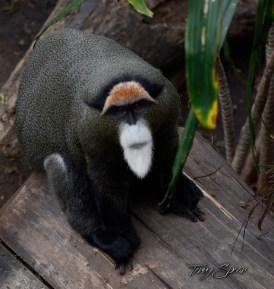 monkey 1000 061