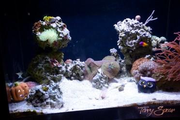 pumpkin in aquarian 1000 959