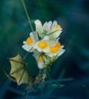 snapdragon flowers 1000 Minnesota 1195