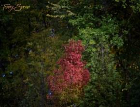 fall colors 1000 562