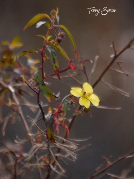 honeybee on yellow flower 1000 056