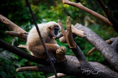 monkey 1000 033