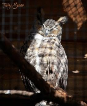 owl 1000 1239