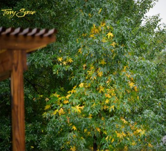 yellow fall leaves 1000 1202