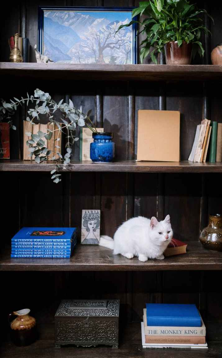 white cat on brown wooden shelf